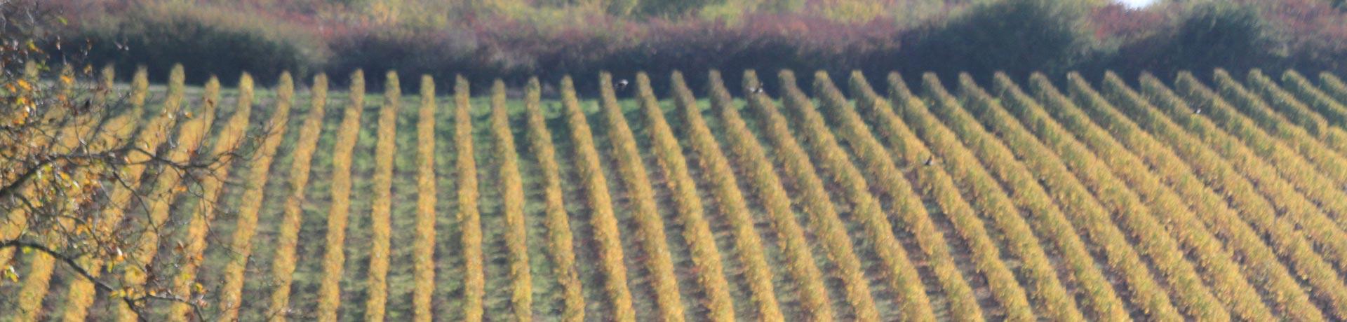 Vignes Pouilly-Fumé Domaine Barillot