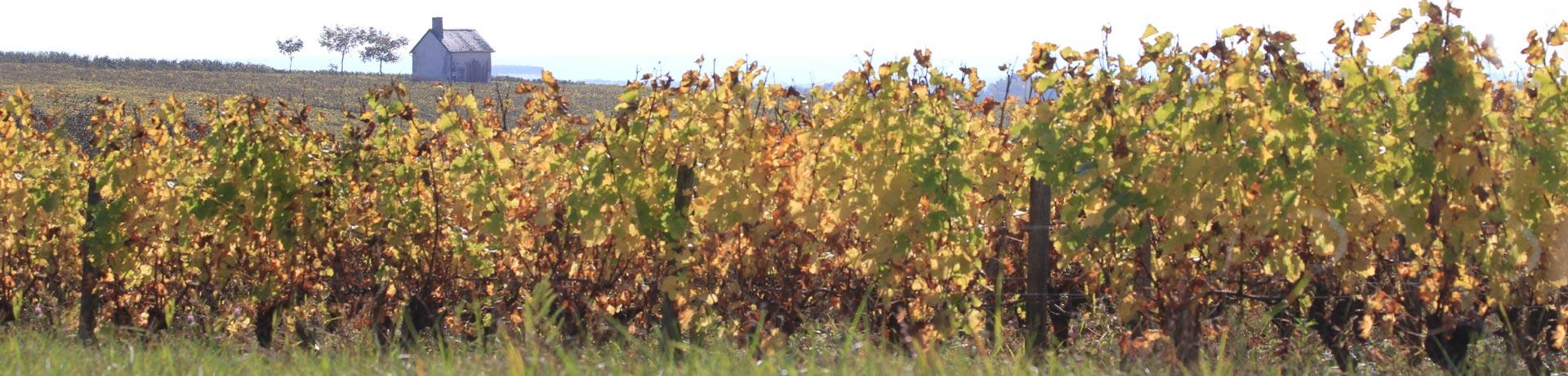 vignes pouilly-fumé barillot